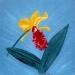 Yellow & Fuschia Orchid