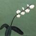 Moth Orchid Branch
