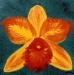 Red & Yellow Hawaiian Orchid