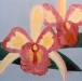 Pink & Yellow Orchid