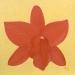 Bright Orange Orchid
